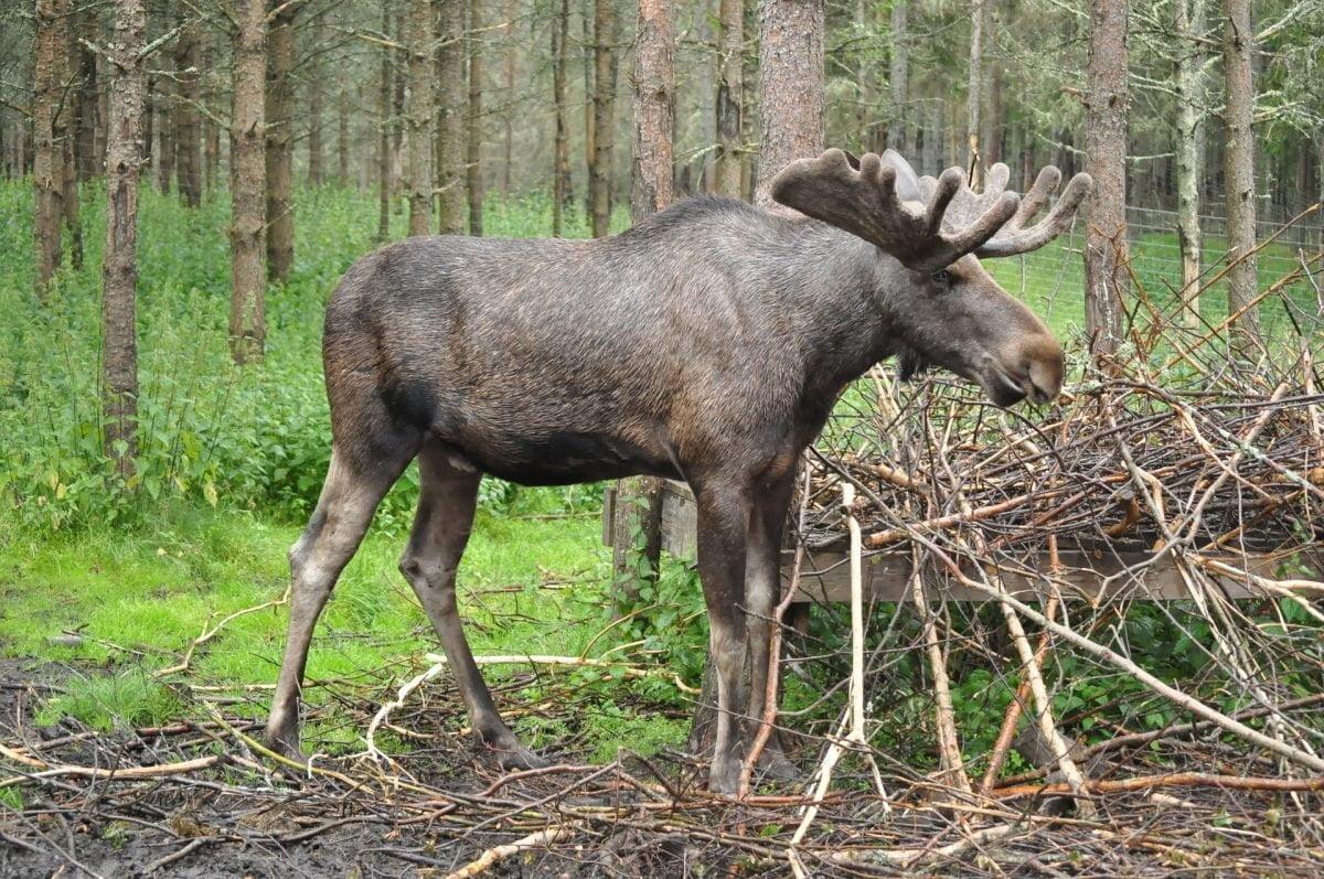 Semester i Sverige. Hyr stuga i Dalsland. Golf, fiske, naturäventyr erbjuds.